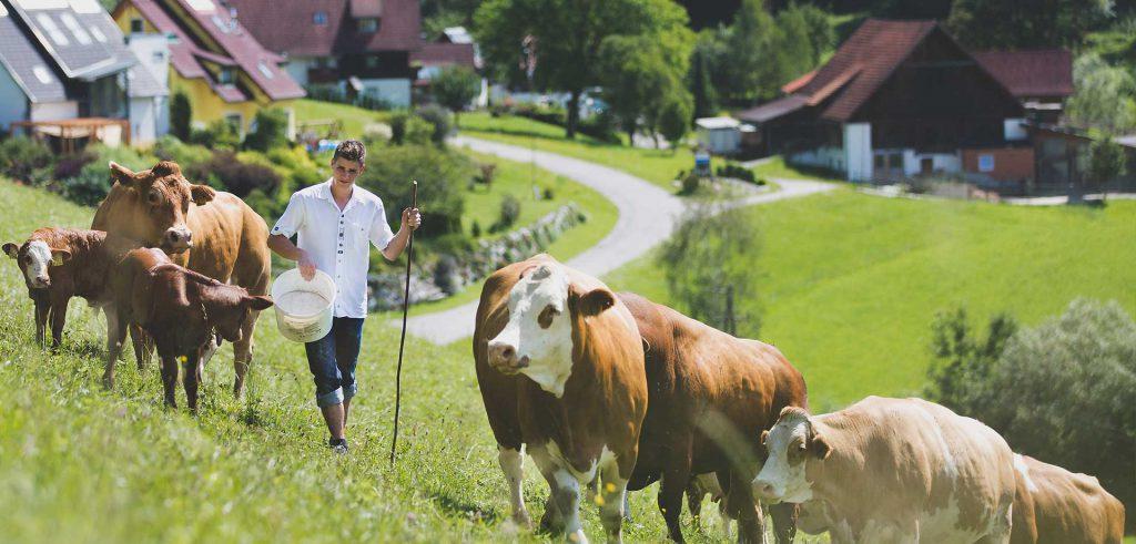Biologische Landwirtschaft Naturräume Bio Tierwohl