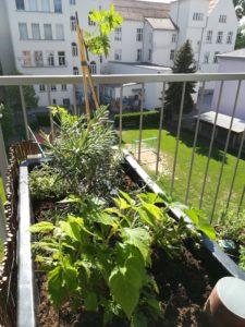 Urban Garden in Graz vom Bio Hof Ellersbacher