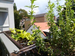 Urban Garden Balkonpflanzen und Gemüse