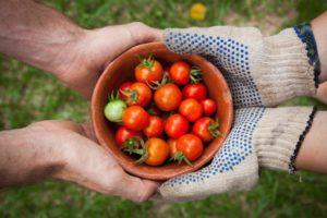 titelbild blogbeitrag FoodCoops Lebensmittel-Kooperativen in oesterreich