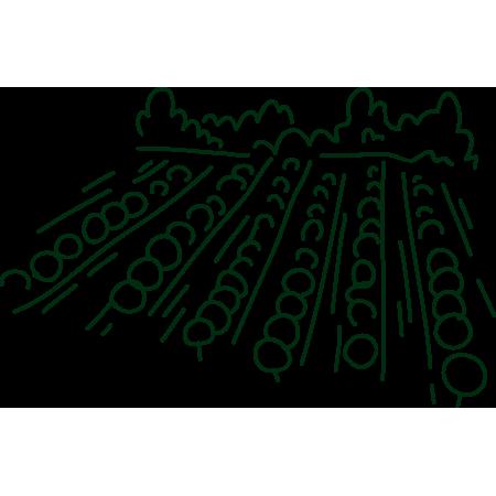 symbolgrafik Gemeinschaftsgarten