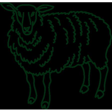 symbolgrafik Schaf